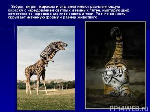 Зебры, тигры, жирафы и ряд змей имеют расчленяющую окраску с чередованием светлы