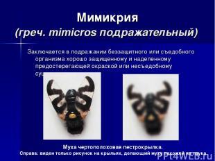 Мимикрия (греч. mimicros подражательный) Заключается в подражании беззащитного и