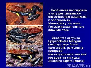 Необычная маскировка у лягушек связана со способностью хищников к обобщениям. Ми