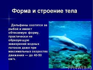 Форма и строение тела Дельфины охотятся за рыбой и имеют обтекаемую форму, практ