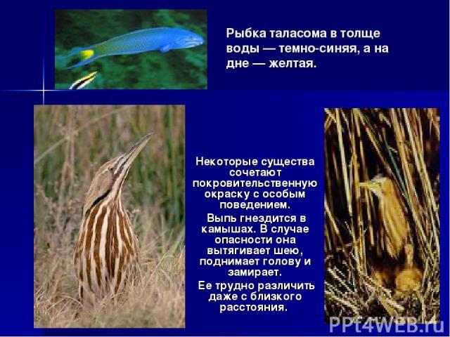 Рыбка таласома в толще воды — темно-синяя, а на дне — желтая. Некоторые существа сочетают покровительственную окраску с особым поведением. Выпь гнездится в камышах. В случае опасности она вытягивает шею, поднимает голову и замирает. Ее трудно различ…