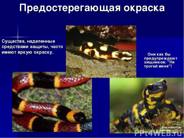 Предостерегающая окраска Они как бы предупреждают хищников: