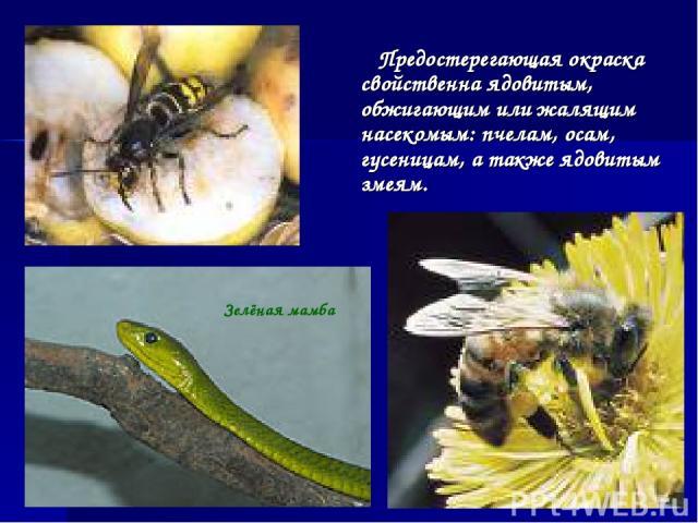 Предостерегающая окраска свойственна ядовитым, обжигающим или жалящим насекомым: пчелам, осам, гусеницам, а также ядовитым змеям. Зелёная мамба