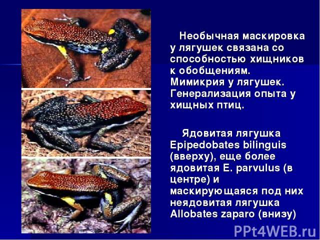 Необычная маскировка у лягушек связана со способностью хищников к обобщениям. Мимикрия у лягушек. Генерализация опыта у хищных птиц. Ядовитая лягушка Epipedobates bilinguis (вверху), еще более ядовитая E. parvulus (в центре) и маскирующаяся под них …