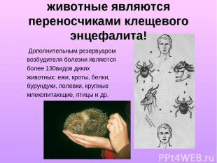 животные являются переносчиками клещевого энцефалита! Дополнительным резервуаром