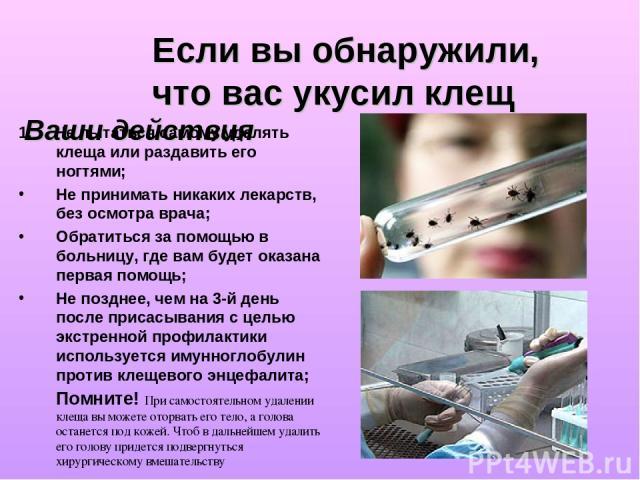 Если вы обнаружили, что вас укусил клещ Ваши действия 1. Не пытаться самому удалять клеща или раздавить его ногтями; Не принимать никаких лекарств, без осмотра врача; Обратиться за помощью в больницу, где вам будет оказана первая помощь; Не позднее,…