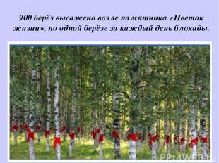 900 берёз высажено возле памятника «Цветок жизни», по одной берёзе за каждый ден