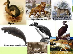 Дронт Европейский лев Морская корова Стеллера Бескрылая гагарка Фолклендская лис