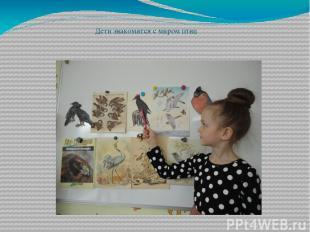 Дети знакомятся с миром птиц