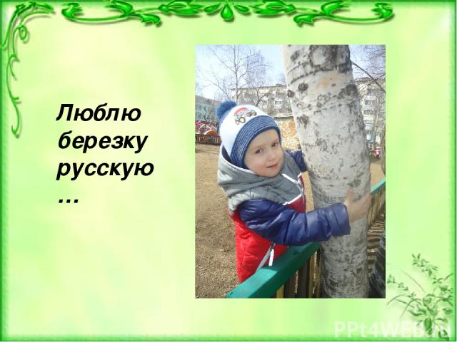 Люблю березку русскую…