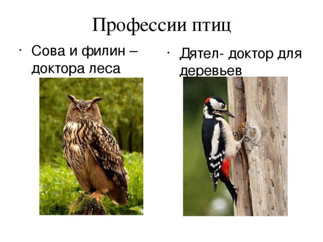 Профессии птиц Сова и филин – доктора леса Дятел- доктор для деревьев