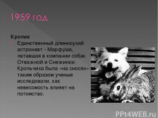 Кролик Единственный длинноухий астронавт - Марфуша, летавшая в компании собак От