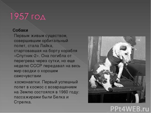 Собаки Первым живым существом, совершившим орбитальный полет, стала Лайка, стартовавшая на борту корабля «Спутник-2». Она погибла от перегрева через сутки, но еще неделю СССР передавал на весь мир сводки о хорошем самочувствии  космонавтки. Первый …
