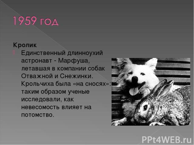 Кролик Единственный длинноухий астронавт - Марфуша, летавшая в компании собак Отважной и Снежинки. Крольчиха была «на сносях»: таким образом ученые исследовали, как невесомость влияет на потомство.