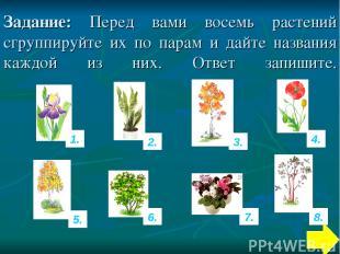 Задание: Перед вами восемь растений сгруппируйте их по парам и дайте названия ка