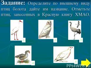 Задание: Определите по внешнему виду птиц болота дайте им название. Отметьте пти