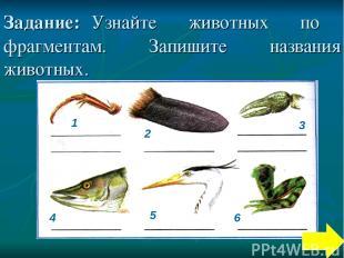 Задание: Узнайте животных по фрагментам. Запишите названия животных. 1 4 2 3 6 5