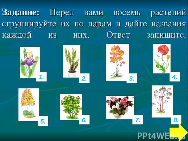Задание: Перед вами восемь растений сгруппируйте их по парам и дайте названия каждой из них. Ответ запишите. 1. 8. 4. 7. 6. 5. 3. 2.