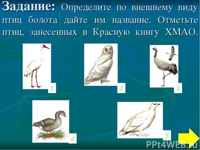 Задание: Определите по внешнему виду птиц болота дайте им название. Отметьте птиц, занесенных в Красную книгу ХМАО. 1 3 2 5 4