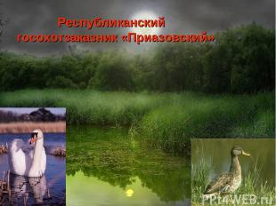 Республиканский госохотзаказник «Приазовский»
