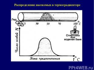 Распределение насекомых в термоградиенторе