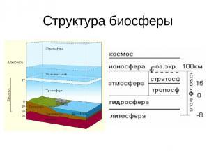 Структура биосферы