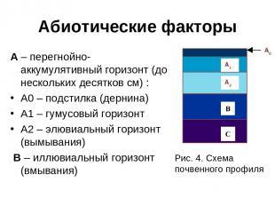 Абиотические факторы А – перегнойно-аккумулятивный горизонт (до нескольких десят