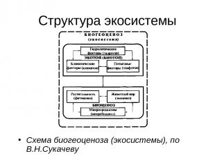 Структура экосистемы Схема биогеоценоза (экосистемы), по В.Н.Сукачеву