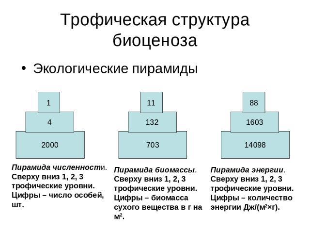 Трофическая структура биоценоза Экологические пирамиды 2000 4 1 703 132 11 14098 1603 88 Пирамида численности. Сверху вниз 1, 2, 3 трофические уровни. Цифры – число особей, шт. Пирамида биомассы. Сверху вниз 1, 2, 3 трофические уровни. Цифры – биома…