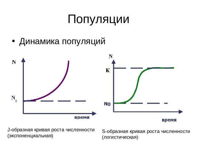 Популяции Динамика популяций J-образная кривая роста численности (экспоненциальная) S-образная кривая роста численности (логистическая)