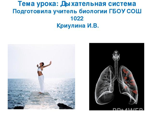 Презентации на тему дыхательная система