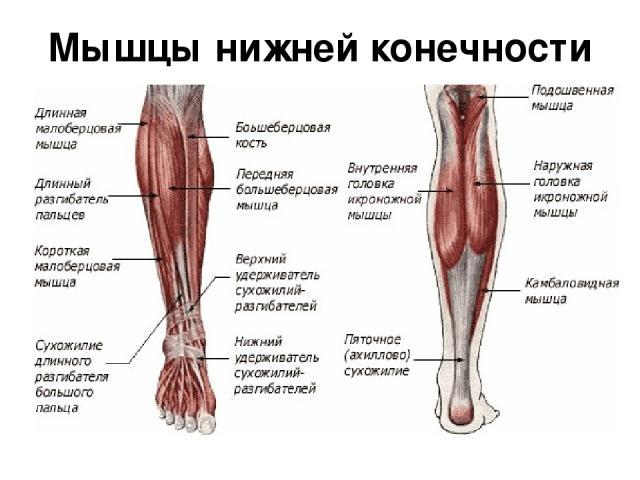 Что делать если болит икроножная мышца после судороги