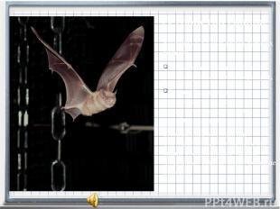 различно у разных видов летучих мышей: остроухая ночница излучает ультразвуковые