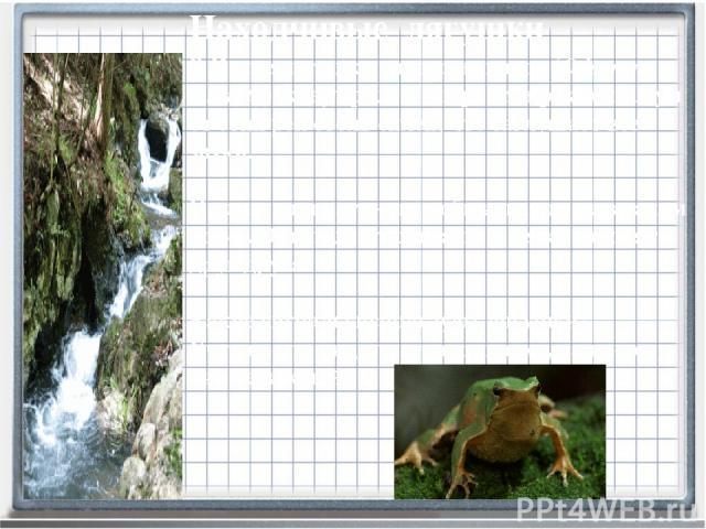 В Китае лягушки одного из видов (Odorrana tormota) живут рядом с горными реками. Шум от этих рек столь силен, что заглушает все звуки. Но лягушки научились общаться даже в таком шуме. Они подают сигналы и легко находят друг друга. Какие сигналы испо…