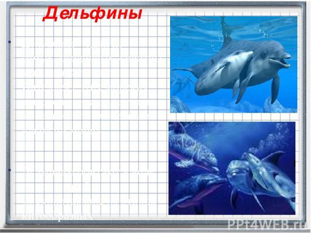 Дельфины Дельфины - одни из самыхзагадочныхживотных на нашей планете. Интеллект этих морских жителей считают настолько высоким, что их называют «людьми моря». Дельфины обитают в воде, но это не рыбы, а млекопитающие из отряда китообразных