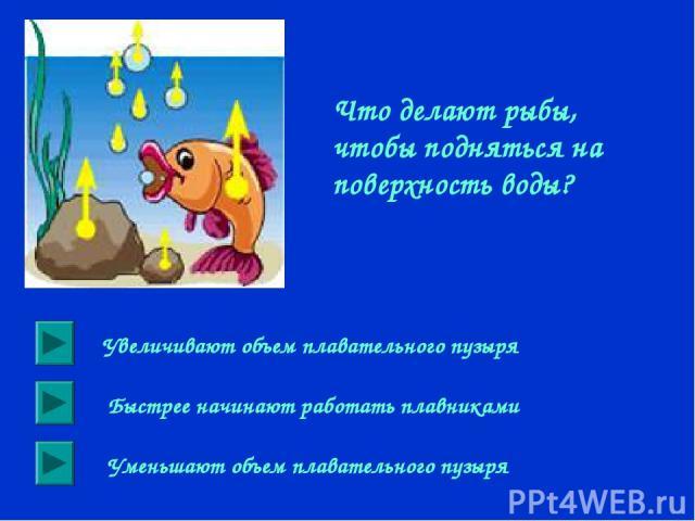 Что делают рыбы, чтобы подняться на поверхность воды? Увеличивают объем плавательного пузыря Быстрее начинают работать плавниками Уменьшают объем плавательного пузыря
