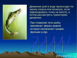 Движение рыб в воде происходит по закону синуса или косинуса, если зафиксировать