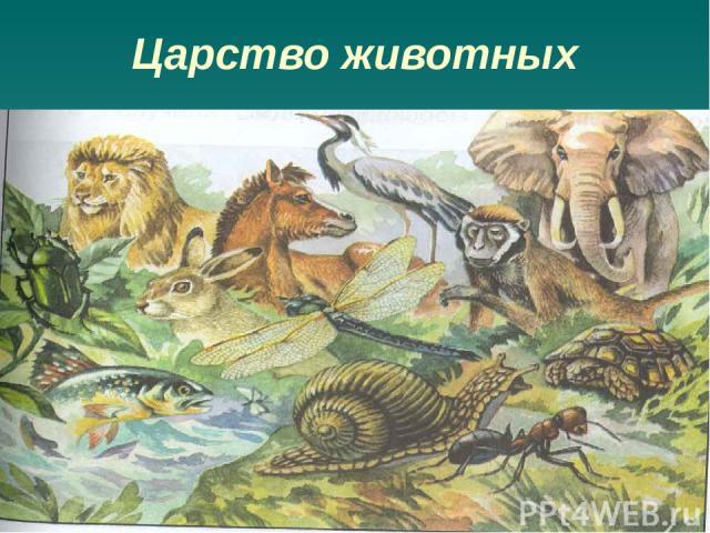 Царство животные одноклеточные и многоклеточные