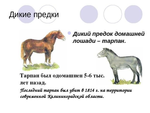 Увлекательное путешествие в мир животных - презентация для ...