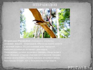 Птеранодон (Pteranodon)относился к семейству летающих ящеров – птерозавров. Оби