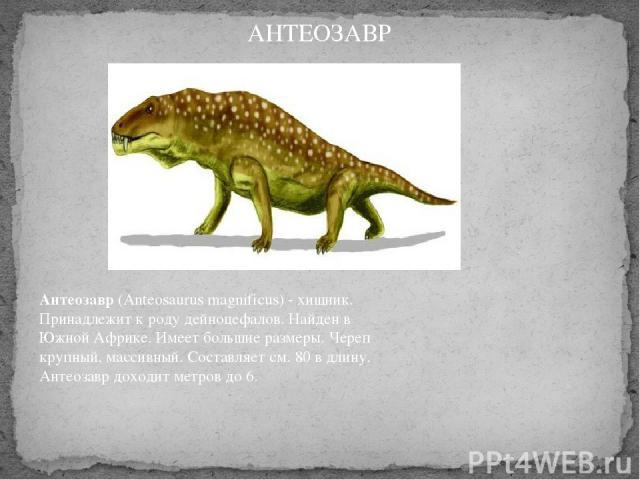 Антеозавр(Anteosaurus magnificus) - хищник. Принадлежит к роду дейноцефалов. Найден в Южной Африке. Имеет большие размеры. Череп крупный, массивный. Составляет см. 80 в длину. Антеозавр доходит метров до 6. АНТЕОЗАВР