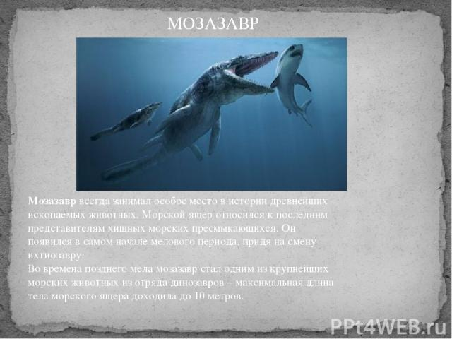 Мозазаврвсегда занимал особое место в истории древнейших ископаемых животных. Морской ящер относился к последним представителям хищных морских пресмыкающихся. Он появился в самом начале мелового периода, придя на смену ихтиозавру. Во времена поздн…