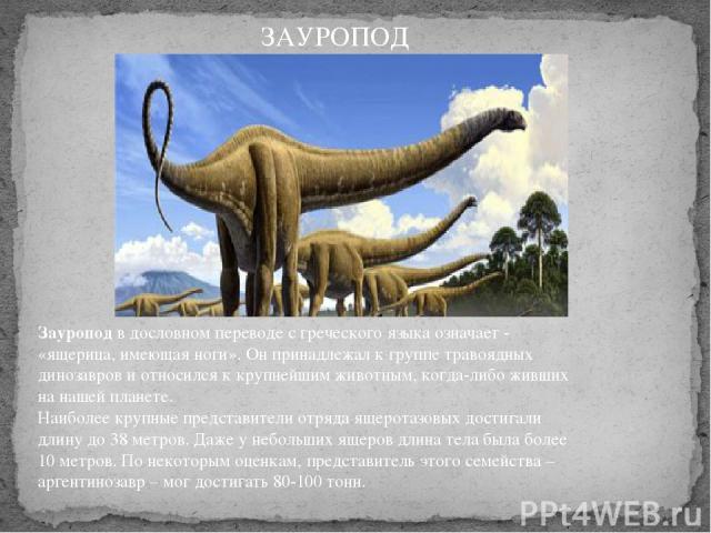 Зауроподв дословном переводе с греческого языка означает - «ящерица, имеющая ноги». Он принадлежал к группе травоядных динозавров и относился к крупнейшим животным, когда-либо живших на нашей планете. Наиболее крупные представители отряда ящеротаз…