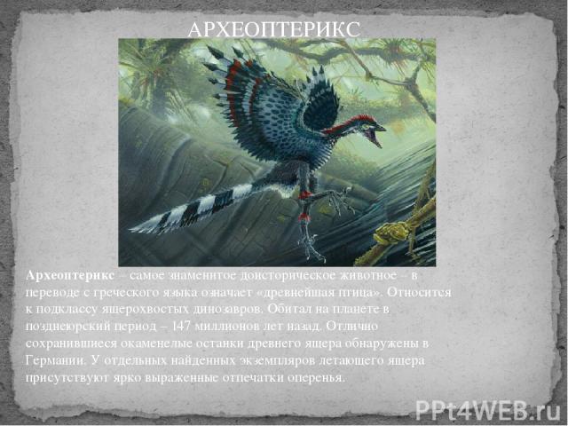 Археоптерикс– самое знаменитое доисторическое животное – в переводе с греческого языка означает «древнейшая птица». Относится к подклассу ящерохвостых динозавров. Обитал на планете в позднеюрский период – 147 миллионов лет назад. Отлично сохранивши…