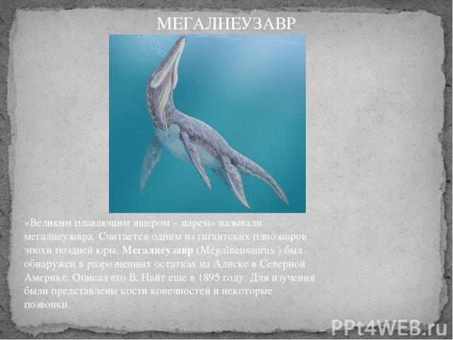 «Великим плавающим ящером – царем» называли мегалнеузавра. Считается одним из гигантских плиозавров эпохи поздней юры.Мегалнеузавр(Megalneusaurus ) был обнаружен в разрозненных остатках на Аляске в Северной Америке. Описал его В. Найт еще в 1895 г…