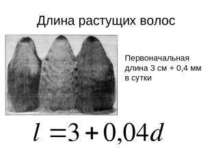 Длина растущих волос Первоначальная длина 3 см + 0,4 мм в сутки