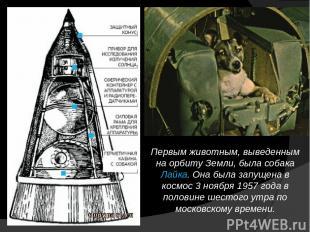 Первым животным, выведенным на орбиту Земли, была собака Лайка. Она была запущен
