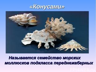 «Конусами» Называется семейство морских моллюсков подкласса переднежаберных