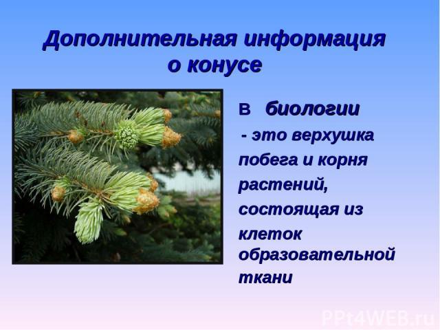Дополнительная информация о конусе В биологии - это верхушка побега и корня растений, состоящая из клеток образовательной ткани