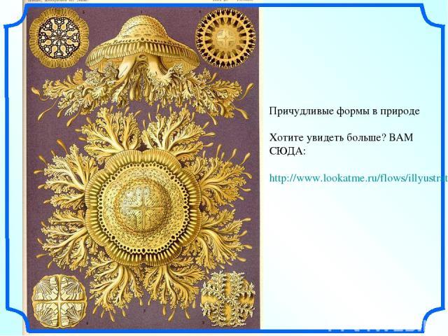 Причудливые формы в природе Хотите увидеть больше? ВАМ СЮДА: http://www.lookatme.ru/flows/illyustratsiya/posts/36694-ernst-haeckel